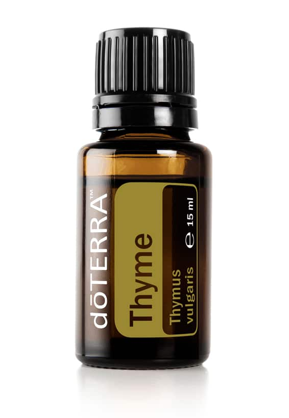 Tijm – Thymus vulgaris – Thyme
