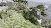 Wier op het strand 4