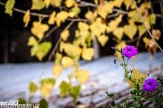 2016yds_sen6255 © LEVENT ŞEN