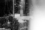 nsb_levent_6-25 © LEVENT ŞEN