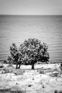 2016yds_sen6982 © LEVENT ŞEN