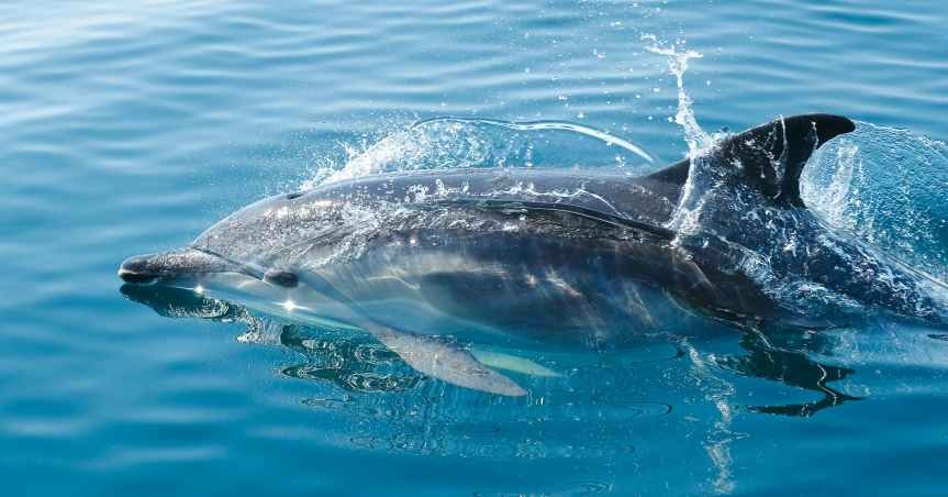 Different Ways To Play With Dolphins | Leverage Ambition