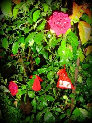 Săculeți cu bani agățați în trandafir