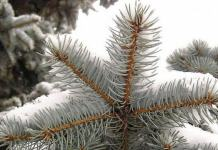 Florentina Loredana Dalian oameni in iarna brad proza