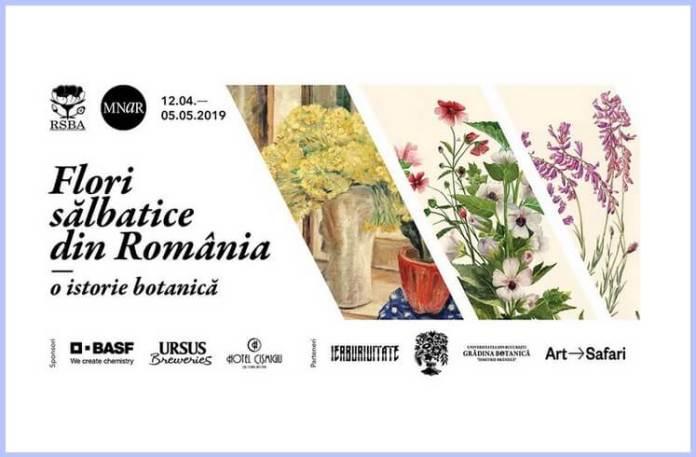 flori sălbatice din România