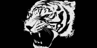 tigrul letitia vladislav proza scurta