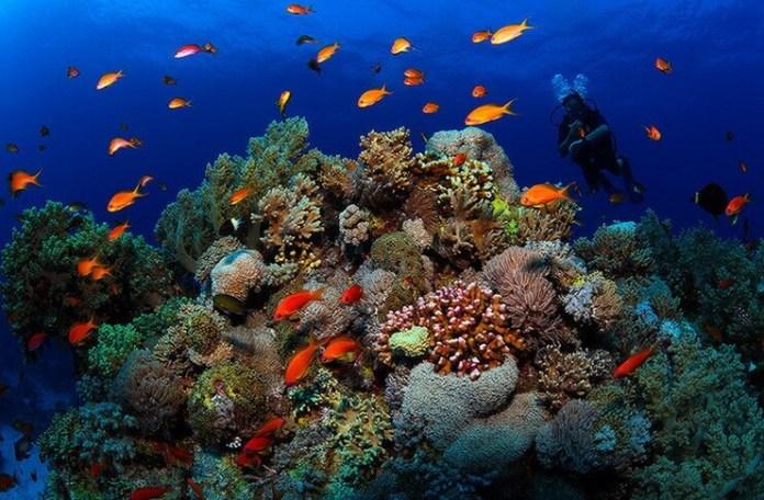 Marea Barieră de Corali