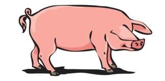 porc ignat