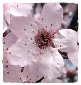Naturopatia percorsi olistici