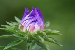 naturopatia monza
