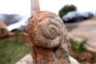 Des fossiles du sol
