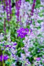 Plantering med blommor i violett.