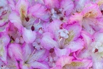 Blomsterdekoration av rhododendron och nävor. Levins Trädgård & Design AB.