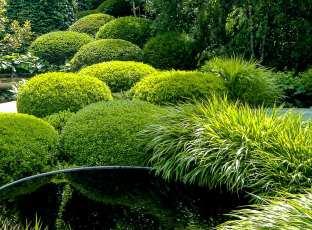 Formklippta idegransklot i kombination med gräs och vatten.