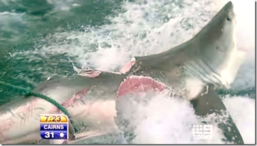 10-foot Great White Shark bitten nearly in half by 20-foot 'monster shark' near Australian beach