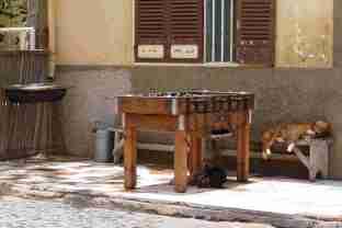 Mankill ou babyfoot et chiens de Palmeira - SAL