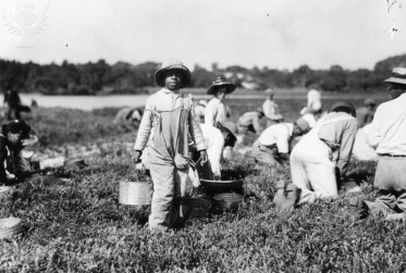 Image result for old black field workers
