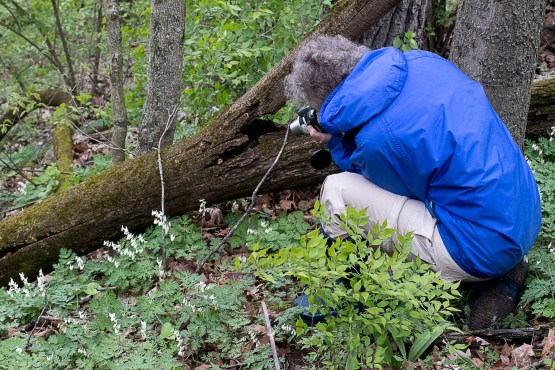 Photo hike- Photographing Dutchman Breeches on Dale's Ridge Trail, April 22, 2017