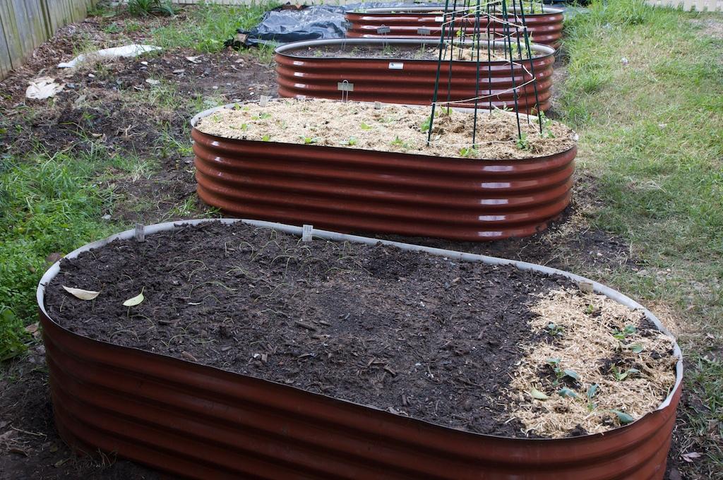 Four garden beds