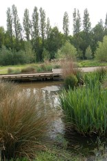 Chinbrook Park Boardwalk