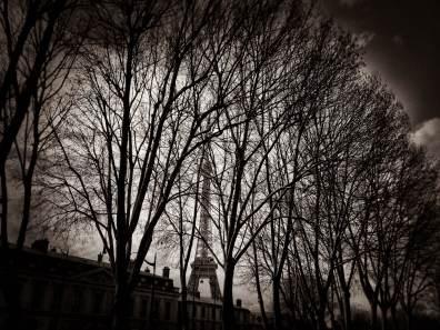 Eiffel Tower through trees