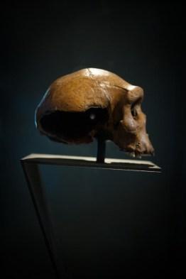 Skull/ National Geographic Traveller © Daniel Lewis 2013