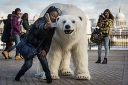 Polar_Bear_Afternoon-8