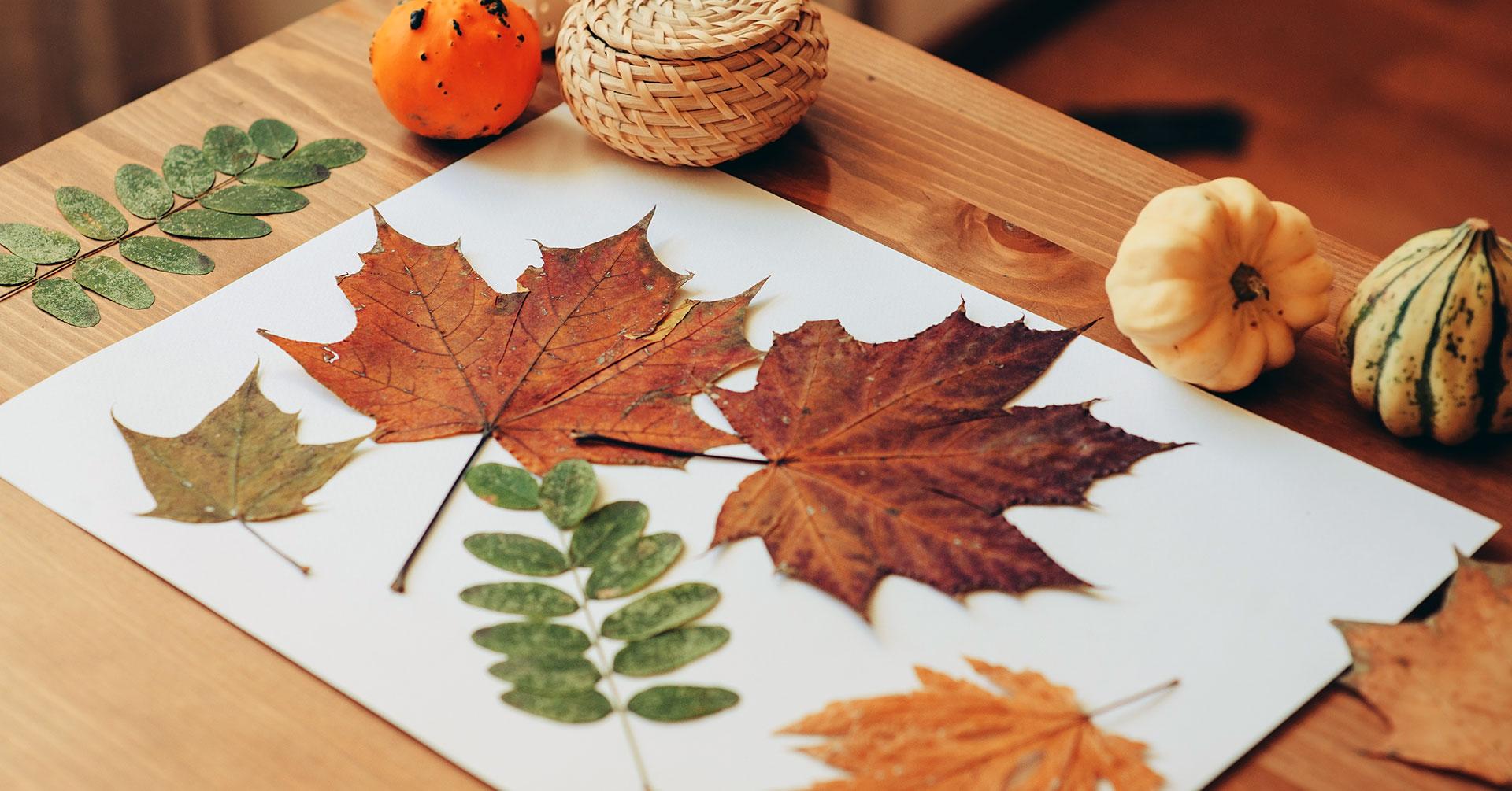 Books & Beyond: Autumn Nature