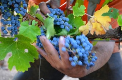 Kenefick Ranch Winery 2