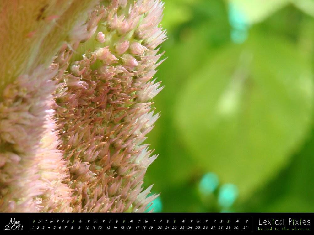 Desktop Wallpaper Calendar: 2011 Nature Theme: Flowers (5/6)