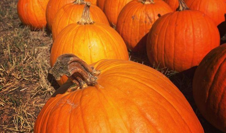 Fall Activities at Denver Downs Farm