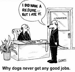 why-dogs-never-get-any-good-jobs-cefjhjkobdgiacfh