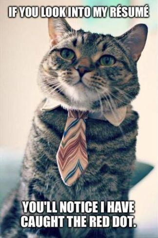 funny-cat-meme-work-4