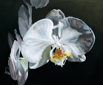 An orchid against a dark background