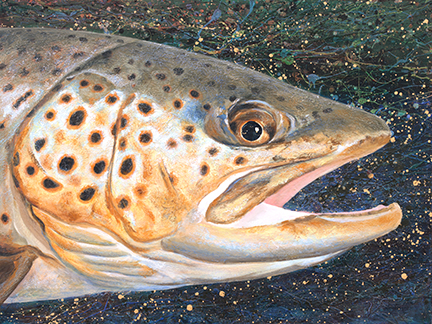 Glowing golden brown trout head floats in front of a dark splattered background.