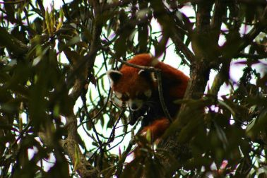 BeFunky_Red-Panda-Eco-Trip-Network.jpg