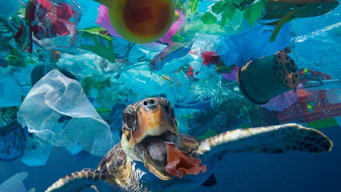 Lajm I Mirë : Zelanda E Re Ka Vendosur Të Ndalojë Përdorimin E Plastikës Unike Deri Në Vitin 2025