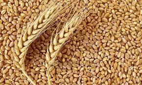 منظومة الحبوب.. بين رهان تحقيق السيادة الغذائية، وتهديدات التغيرات المناخية