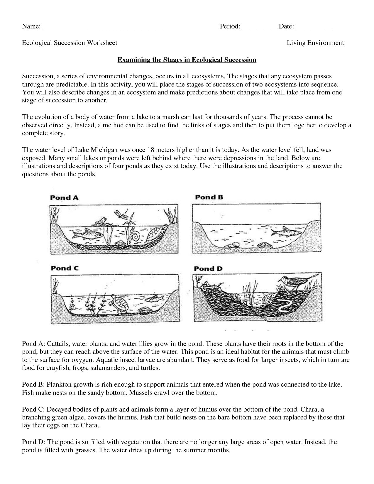 Food Digestion Worksheets