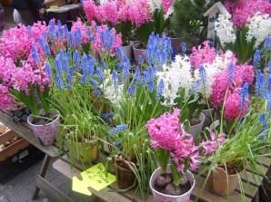 hollanda-çiçek-pazarı-amsterdam