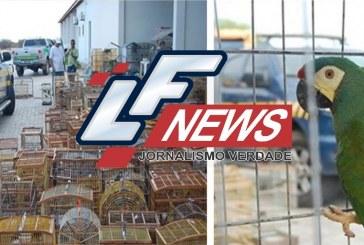 Ação em 12 municípios baianos resgata mais de 1700 animais silvestres