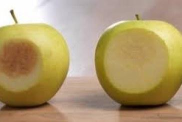 Cientistas criam técnica capaz de evitar que maçãs escureçam