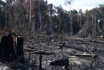 Relatório aponta assassinatos e impunidade na Amazônia