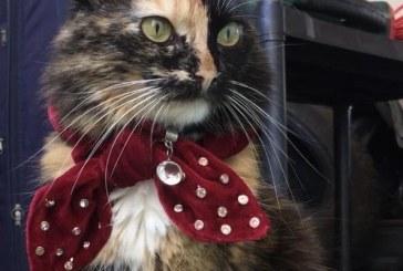 Hospital veterinário da Unime promove Outubro Rosa Pet