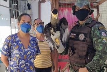 Lauro de Freitas: Animais silvestres são devolvidos à natureza