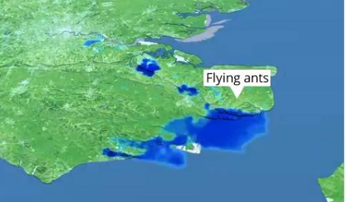 Após gafanhotos, nuvem de formigas voadoras aparece em radares meteorológicos