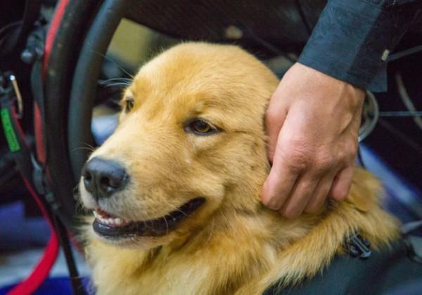 Que onda! Vereadores aprovam lei que proíbe cachorros de latir com multa de R$ 23 mil