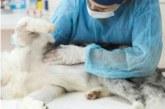 Pesquisa investiga coronavírus em pets em cinco capitais