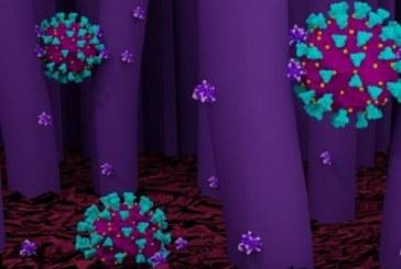 França investiga nova variante que 'escapa' de teste PCR