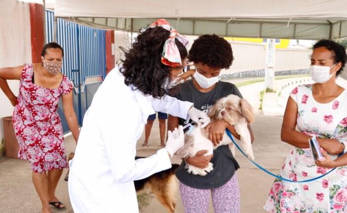 Lauro de Freitas vacina 10.222 pets contra a raiva e ultrapassa meta antes do fim da campanha